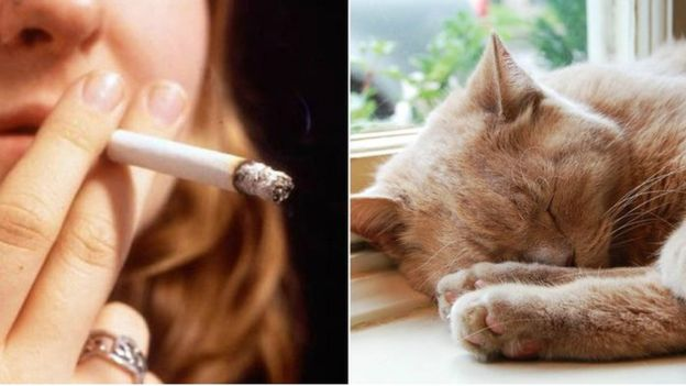 Napi 2 cigaretta fájhat-e a máj a dohányzás miatt