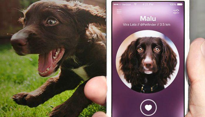 Ferramenta contém dados do animal. Foto: ativarsentidos.com.br.