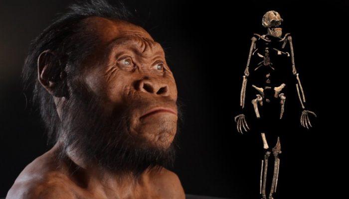 A criatura foi descoberta na caverna Rising Star. Foto: youtube.com.